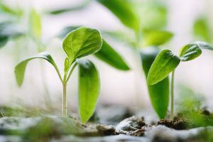 growth-2_sm